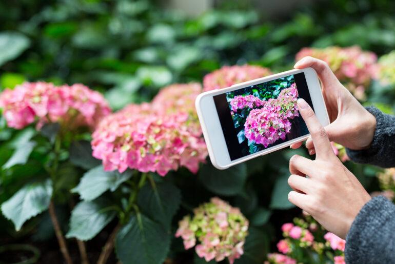 Smart Garden: come funziona e caratteristiche